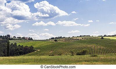 chianti, vignobles, collines