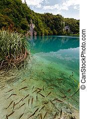chiaro, lago, con, fish, in, plitvice, laghi, parco nazionale
