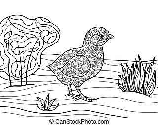 Chick coloring book for adults vector