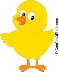 Chick - little yellow chick
