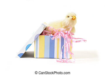 Chick in a Gift Box
