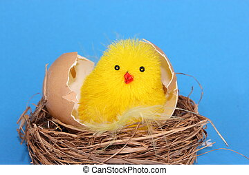 chick in egg shell