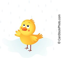 Chick in the rain