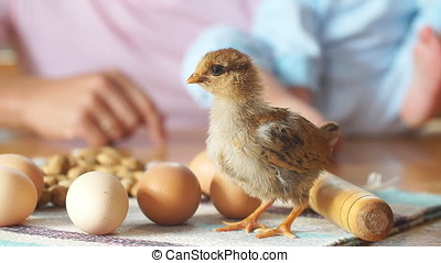 chick is on the kitchen table next to whole eggs