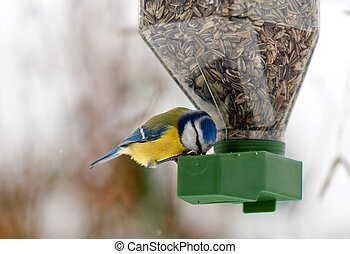 Chickadee - a chickadee feeding on a bird feeder