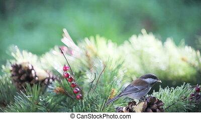 chickadee bright background