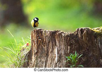 chickadee sitting on a stump