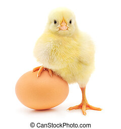 chicken and egg - brown egg and chicken isolated on a white ...