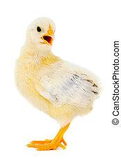 Chicken baby