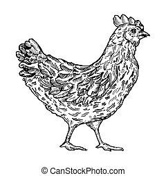Chicken bird engraving style vector illustration