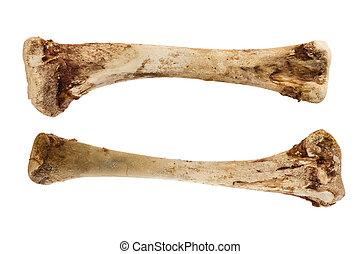Chicken Bones - chicken leg bones isolated on white...