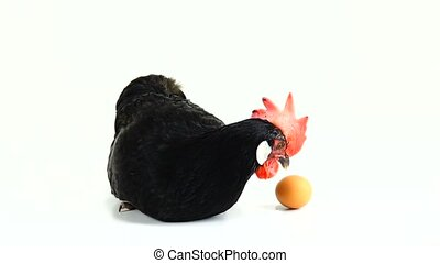 chicken carries an egg on a white screen
