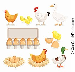 Chicken duck chick egg packaging and chicken eggs on the...