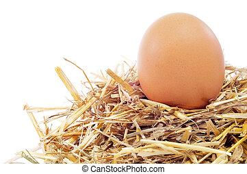 chicken egg in a nest