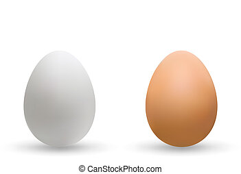 Illustration of the two chicken eggs isolated over white with shadow