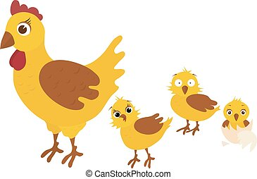 Chicken family, mother takes her three yellow chickens