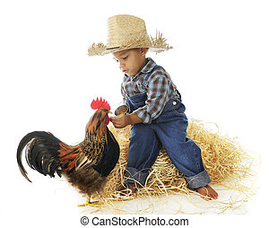 Chicken Feed - An adorable preschool farm boy hand feeding a...