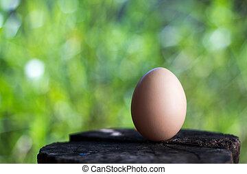 Chicken laid eggs on fresh green background.