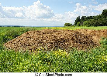 Chicken manure heap - Agriculture concept: Chicken dung hill...