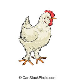 chicken sketch animal farm icon. Vector graphic