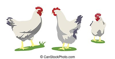 Chicken. Vector flat illustration isolated on white