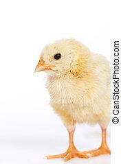 chicken, weinig; niet zo(veel), beeld, verticaal