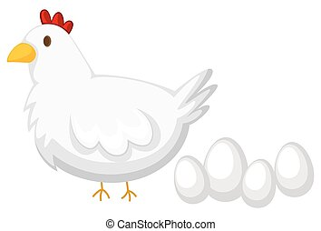 Chicken with white feather and four eggs