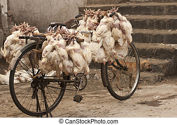 Chickens on a Bicycle - Handlebars of a bicycle loaded up...