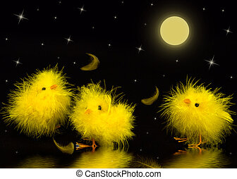 Chicks at Night