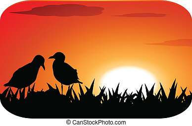 chicks at sunset