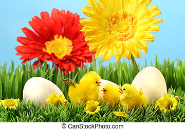 chicks, græs, påske