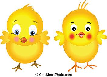 chicks, gul