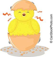 chicks in eggshells