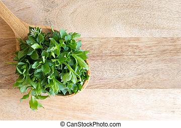 Chickweed on a wooden spoon with copy space