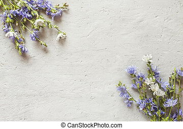 Chicory flowers on gray background. Medicinal plant Cichorii. Copy space