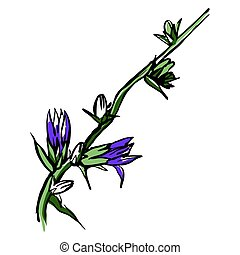 Chicory purple flower sketch. Hand drawn vector illustration isolated on white background.