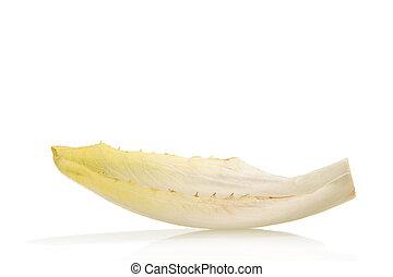 chicory - fresh endive leaf over white background
