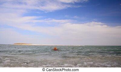 chien, épagneul, cocker, sea., coast., anglaise, nage