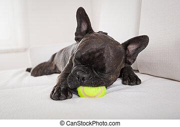chien, épuisé, après, jeu