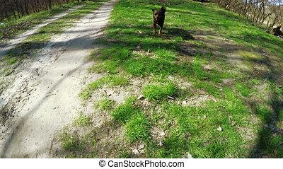chien aboyer, nature
