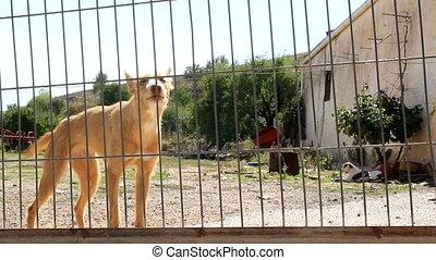 chien aboyer