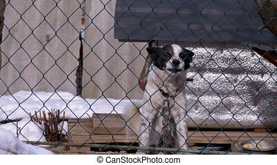 chien, arrière-cour, aboiements, barrière, gens, garde, ...