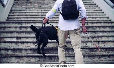 chien, aveugle, arrière, promenade haut, vue, guide, city.,...