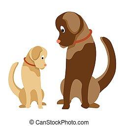 chien, away., lumière, assied, color., dog., amical, regarde, labrador., jeune, race