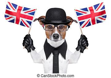 chien, britannique