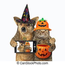 chien, chat, halloween, étreint, 3