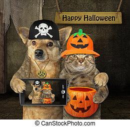 chien, chat, halloween, étreint