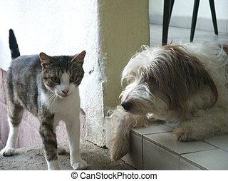 chien, chat