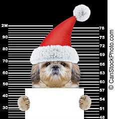 chien, claus, isolé, shitzu, noir, santa, prison.