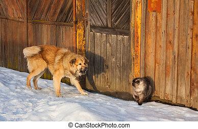 chien, combat, chat